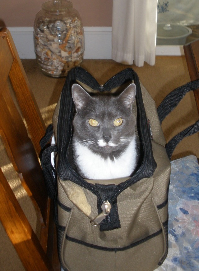 Have cat, will travel.  =^.^=