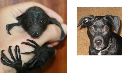 Even the dog is starting to look like a bat.